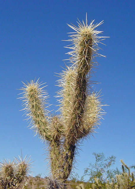 Small cactus plant with large thorns flickr photo sharing - What is cactus plant good for ...