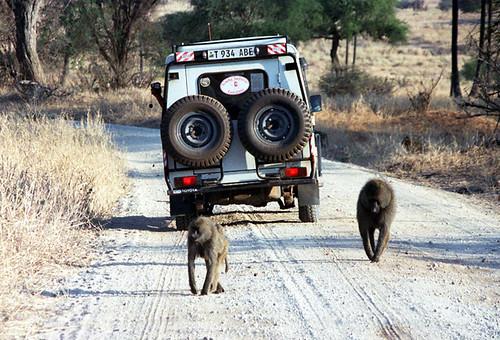 Сафари с дикой природой