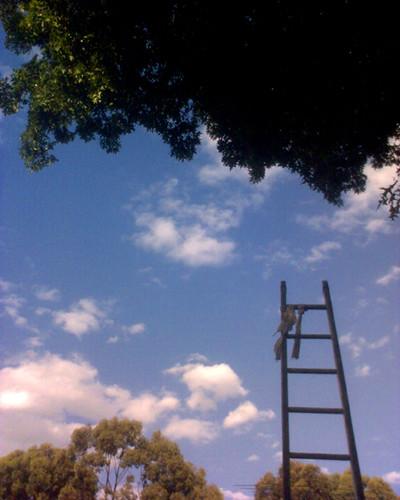 Ladder by Christop