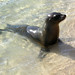 Small photo of Sea lion