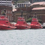 Wellington Tugs