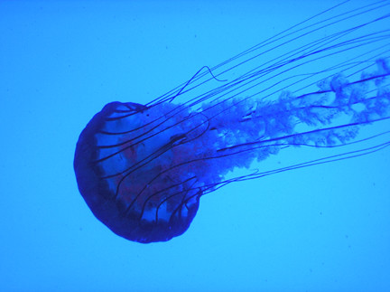 Nettlefish flickr photo sharing for Sjfc fish r net