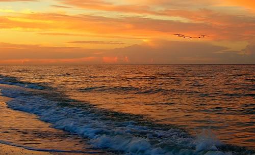 seascape pelicans sunrise geotagged dawn florida albaluminis sanibel gom todayisagoodday westgulfbeach diggininthecrates tiagd kendouglas