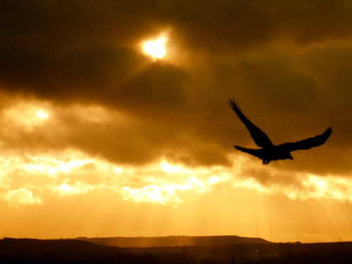 bird of life