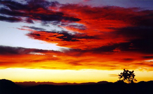 Grandview Sunset, Ancient Bristlecone