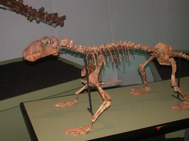 utdødde dyr siste 100 år