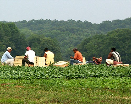 Working - Migrant Farm Workers
