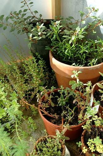 Invernadero de plantas acuaticas i flickr photo sharing for Plantas para invernadero