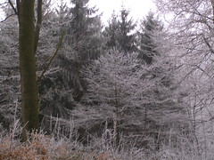 freezing_tree