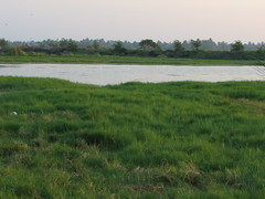 fen, wetland, floodplain, prairie, land lot, steppe, reservoir, grass, tree, river, plain, natural environment, meadow, salt marsh, pasture, rural area, grassland, pond, waterway,