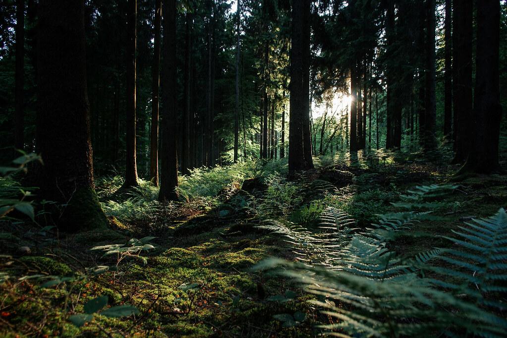 Tourisme vert en Meuse - de la vallée de la Meuse à l'Argonne - Lumière de sous-bois