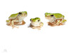 3 green (Grey) tree frogs on white by marianna.armata