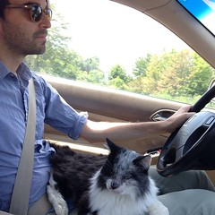 Fluffy, who is not a lap cat and generally hates being touched, held or bothered, sat on my lap the entire drive back from his doctors appointment in New Jersey yesterday. He also threw up all over the backseat on the drive there. Photo by @annakatrinabak