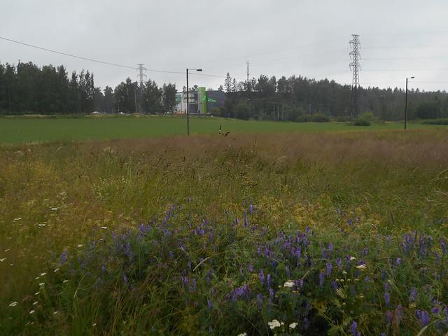 Niittykasveja A 8.7.2015 Espoon Karakallion ja Leppävaaran välinen peltoalue