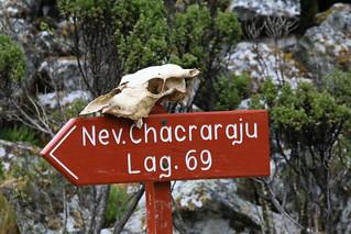 Walk to Lago 69.  Peru.