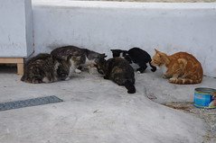 CATS OF MYKONOS