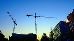 DC Dance of the Cranes 59098