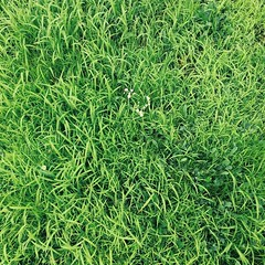 annual plant, flower, leaf, grass, plant, green, lawn, groundcover,