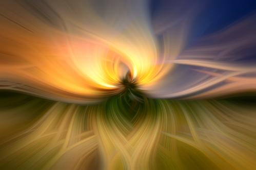Spiral Flower Grapic Effect