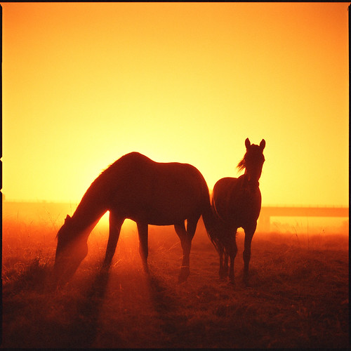 red scale dawn por Steve