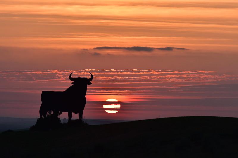 El Toro de España .