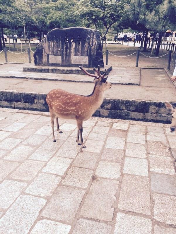 鹿 (7)