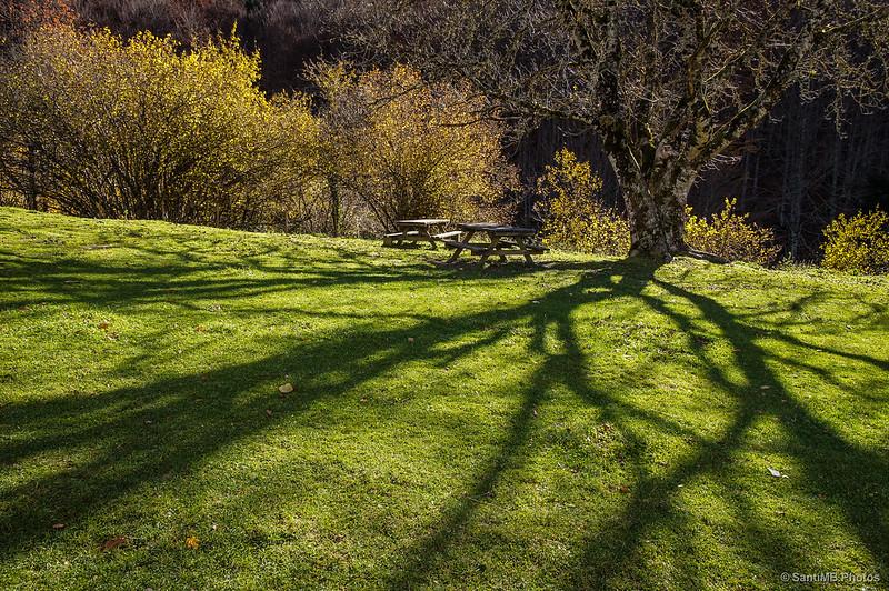 Sombra de otoño