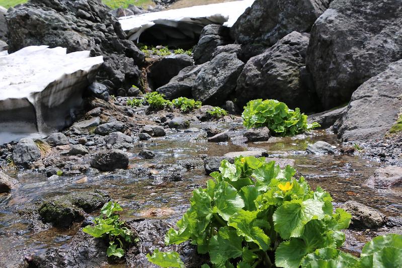 2014-07-20_01135_北海道登山旅行.jpg
