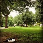 One of Tulane's campus cats enjoying some shade on the academic quad #Tulane #OnlyAtTulane #TulaneSummer