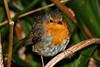 Little_Bird by remigius.altenberg