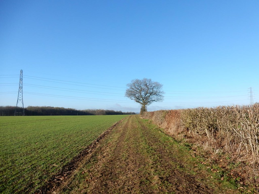 A lone tree Great Missenden to Amersham