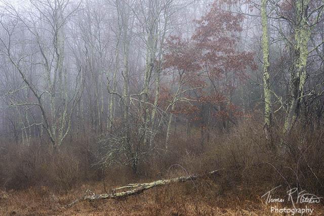 Big Ditch Wildlife Management Area