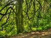 Tree beside a path