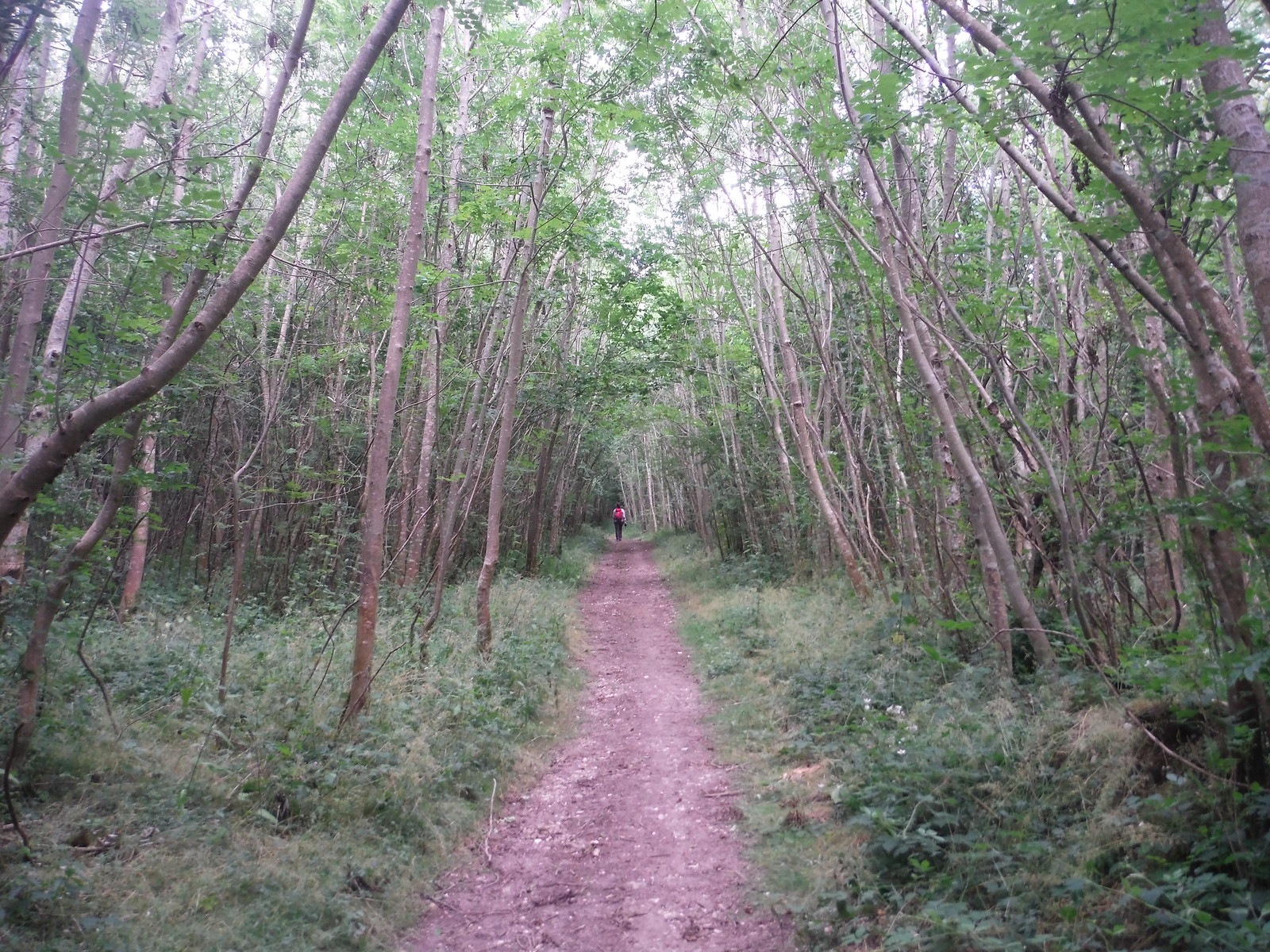 The Rough SWC Walk 217 Midhurst Way: Arundel to Midhurst