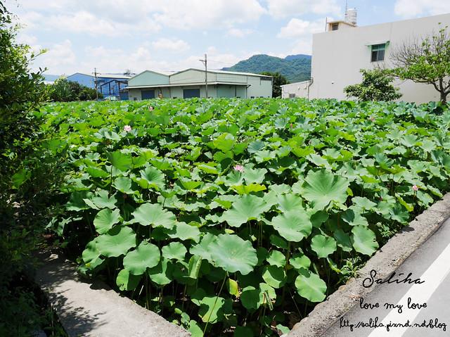 三峽蓮花景點 (3)