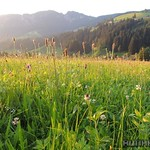 2015_Tirol_090
