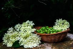 Day 186 of 365 - Gooseberries and Elderflowers in…