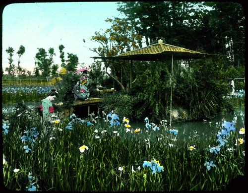 Iris garden beside water; wooden bridge to small roofed island; two women in Kimonos on bridge and one standing among flowers.