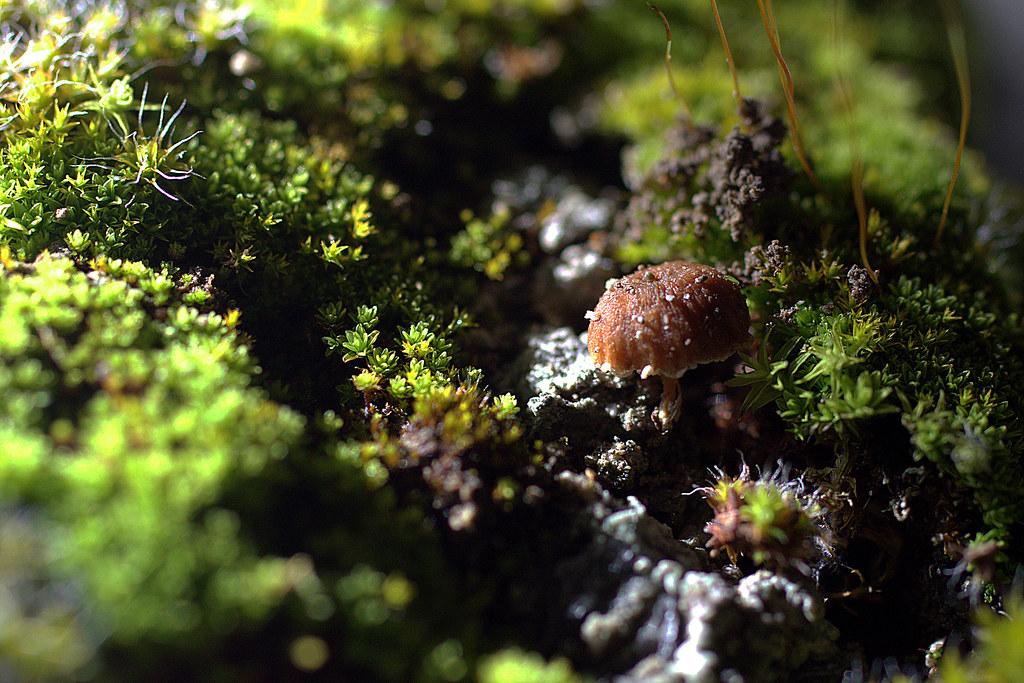esta mañana, una minúscula seta entre el musgo
