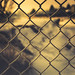 frosty fence - 365/366 by auntneecey