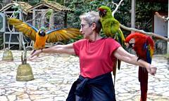 'Overseas Adventure Travel', 'Route of the Mayas', Honduras, Joy, Macaw Mountain, OAT