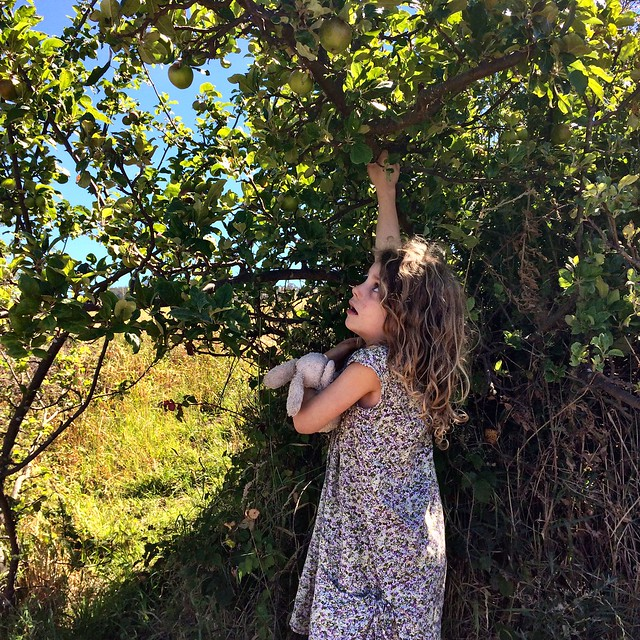 Reaching for the wild apples at Copper Alley Bay