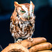 The Owl Of My Soul by curious_spider