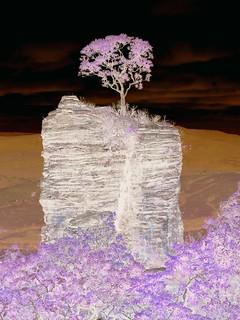 Lonesome tree on rock column / Árvore solitária sobre coluna de rocha