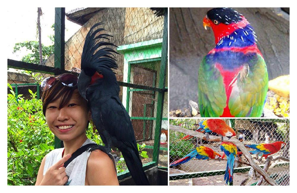 30-birdpark4-via-elisatravels,-baligetaways.com