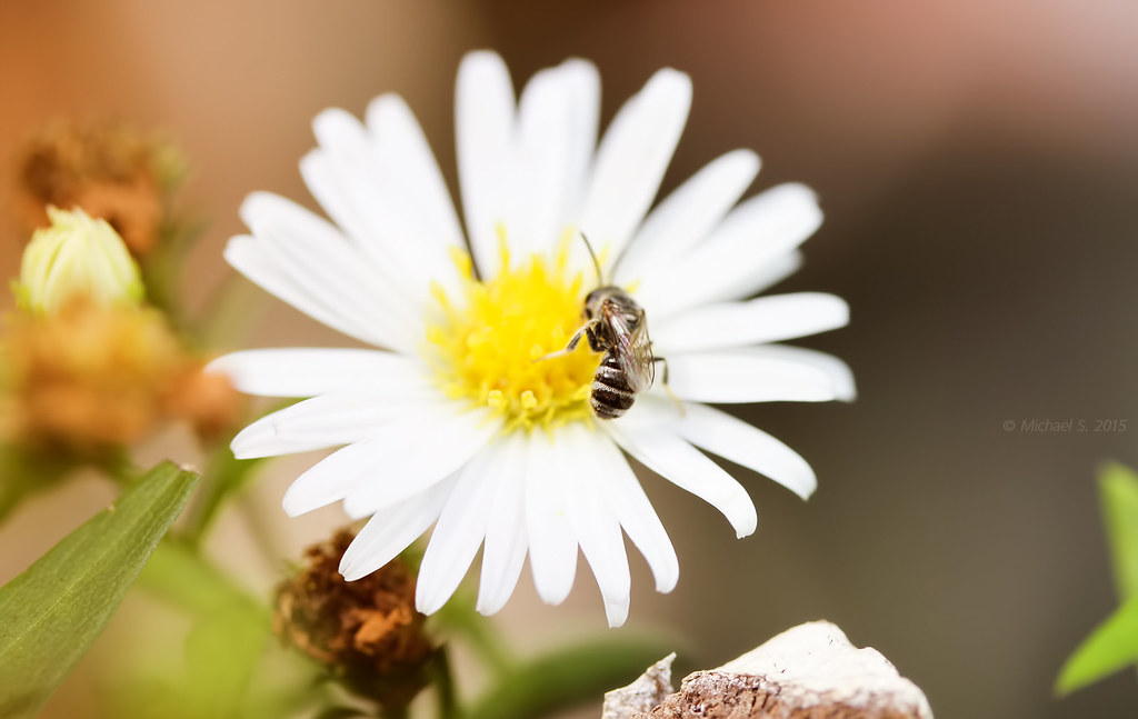 jolly bee - Download Photo - Tomato to - Search Engine For