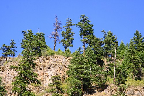 tree bluelakebostonbar