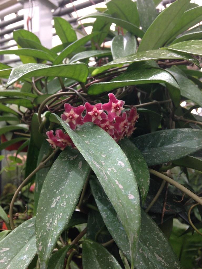 Orchidarium de Prangins 19311279241_49d50935b3_b