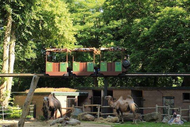 ouwehands dierenpark 30.06.2015  6