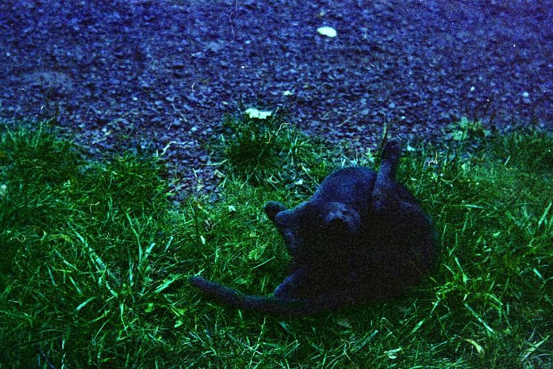 «Lomographic cat»